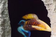 Helmhornvogel; Aceros cassidix; Knobbed Hornbill