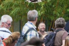 Flugsshow; bald eagle; Haliaeetus leucocephalus; Weißkopfseeadler