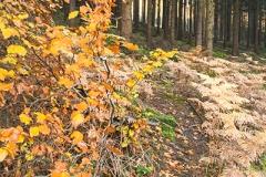 Kultur- und Waldlehrpfad rund um den Altenberger Dom