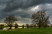Spaziergang in den Rheinauen