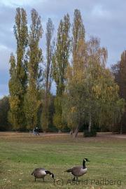 Düsseldorf Südpark im Herbst