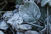 Eingefroren