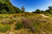Wahner Heide (c) Gerd Baumann