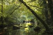 Stille, Dartmoor Nationalpark