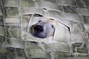 Durchblick, Zoologischer Garten, Wuppertal