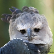 Ich seh Dir in die Augen, Zoologischer Garten, Wuppertal
