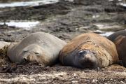 In der Ruhe liegt die Kraft, Falkland Inseln