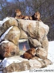 Unter Beobachtung, Zoologischer Garten, Wuppertal