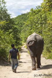 Spaziergang, Phnom Tamao Wildlife Reserve