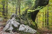 Schieflage, Triglav Nationalpark