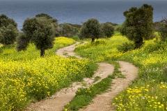 Yol, Besparmak Trail