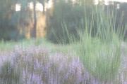 Wahner Heide (c) Andrea Hermann