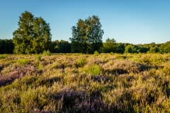 Wahner Heide (c) Andreas Otto