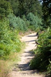 Wahner Heide (c) Astrid Padberg
