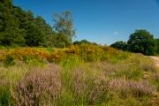 Wahner Heide (c) Detlef Buxmann