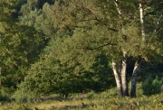 Wahner Heide (c) Ulrike Kaulfuß