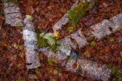 Herbst (c) Astrid Padberg