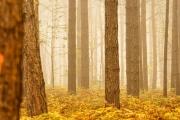Herbst (c) Gerd Baumann
