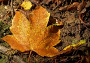 Herbst (c) Detlef Buxmann