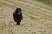 Jeder-Hund-Rennen 2019