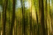 Bäume (c) Sylvia Gödcke-Baumann