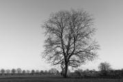 Mein Freund, der Baum ... (Immerath 2019)