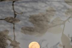 Mond auf der Flucht ins Gebüsch