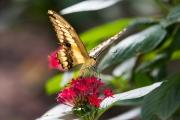 Schmetterlingshaus Hamm_27