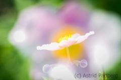 Mehrfachbelichtung - Astrid Padberg