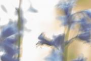 Frühling 8
