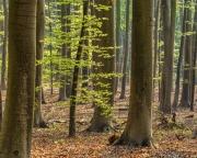 Im Frühlingswald