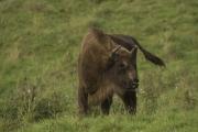 Wildpark Neandertal