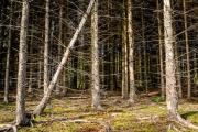 Portrait eines Waldstücks (c) Andreas Otto