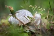Porträt einer Weinbergschnecke; die Peilung steht