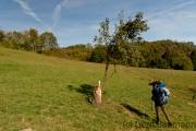 Am Waldrand, Elzbach