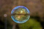 Die Hardt in der Blase