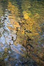 Herbstfarben (c) Astrid Padberg