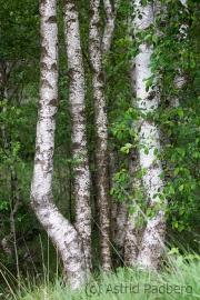 Homberger Moor