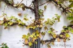 (c) Astrid Padberg, Fotowalk, 16 mm